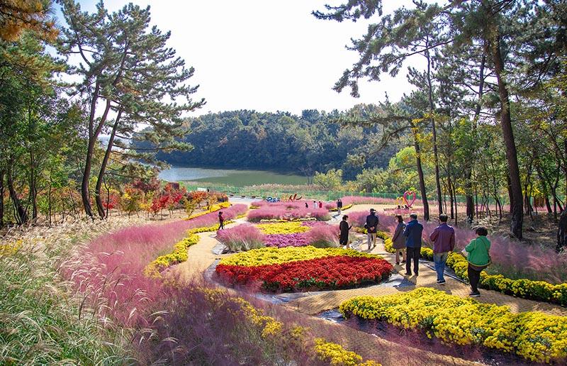 신흥근린공원 국화전시.jpg