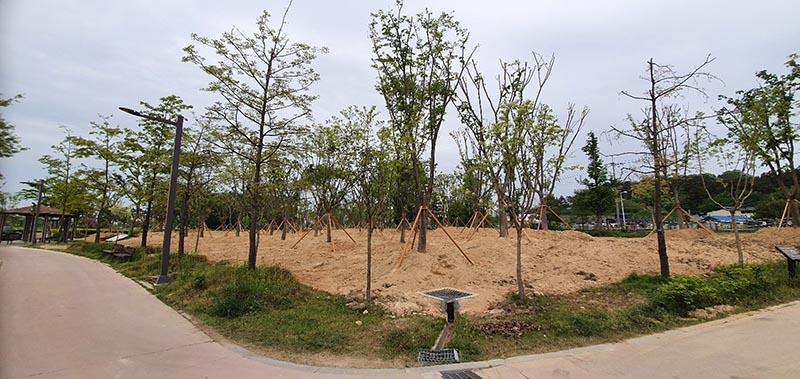 느티나무 시민의 숲 조성 (2).jpg